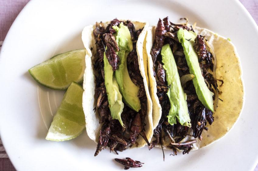 从蚂蚱Taco到羊杂汤